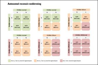 <p>Korsningsschema autosomal recessiv nedärvning</p>
